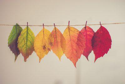 Fab Friday: 27th - A Celebration Of Autumn {writinginthekitchen.com} @WritingInTheKitchen